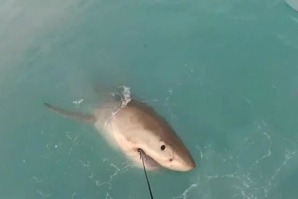 LOCATING SHARKS WITH TWITTER