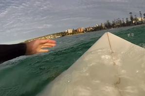 Great White Shark Circles Around Surfer