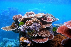 What would happen if all corals on planet Earth died?